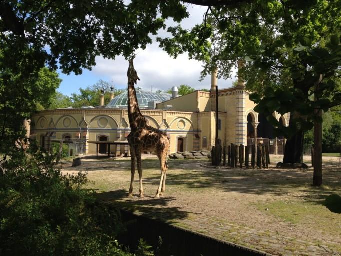 IC Berlin - Zoo Giraf