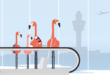 Claimingo - Een makkelijke manier om je vertraagde / gecancelde vlucht te claimen
