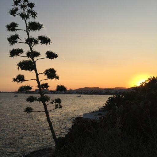 Tropical Garden Ibiza