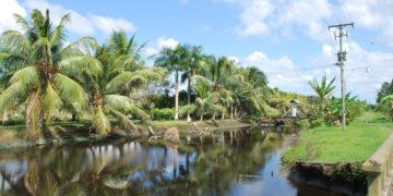 Bestemmingstip: Suriname - Omgeving Paramaribo