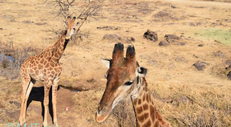 Aanraders in de omgeving van Johannesburg