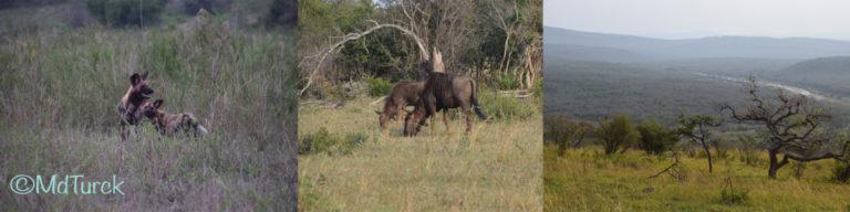 St. Lucia, Durban en de prachtige natuurparken