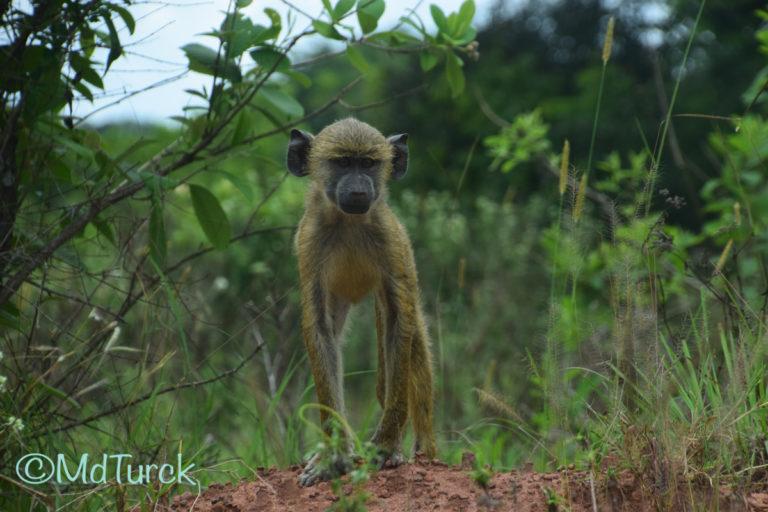 Bestemmingstips: Diani Beach & Omgeving - Kenia