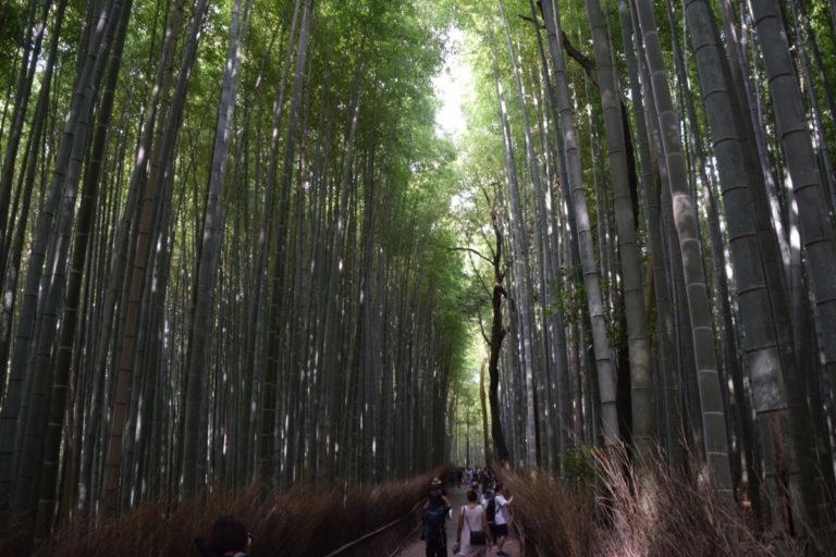 Bamboo bos nabij Kyoto