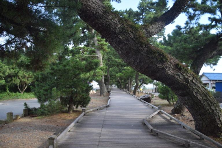 Op weg naar het strand van Miho no Matsubara loop je langs een rij oude Japanse bomen