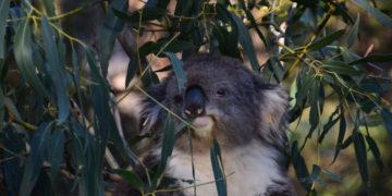 Bestemmingstips – Zuid-Australië & Philip Island