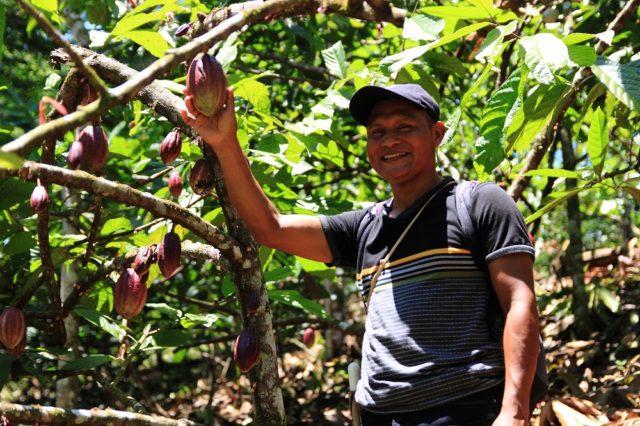 Aangeplant bos in combinatie met cacaobomen in Panama (Bron: KLM)